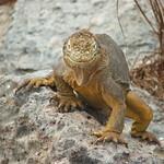 """BIO 245: Ecology of Ecuador<a href=""""http://farm8.static.flickr.com/7041/7142155441_07703a7a8e_o.jpg"""" title=""""High res"""">∝</a>"""