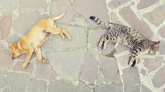 The calm after a storm (comai.francesco) Tags: portrait dog cute nature cat spring couple sweet sleep natura sleepy sweetest dogcat loge