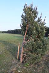 Half a tree (Pascal Volk) Tags: 35mm wideangle wa ww brandenburg naturepark naturpark superwideangle sww uwa weitwinkel swa ultrawideangle havelland uww schutzgebiet protectedarea ultraweitwinkel superweitwinkel canonef1635mmf4lisusm canoneos6d glpe havelaue westhavelland