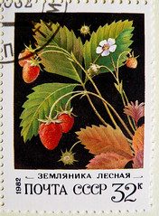 great stamp Russia 32k strawberries (Fragaria; Erdbeeren, fraises, eper, aardbeien, fresas, fragola, , , ilek, , , morangos, , jordbr, truskawka, , jagode, jordgubbar) timbre Union sovitique Russie selo Rusia posta 32 (thx for sending stamps :) stampolina) Tags: fragaria erdbeeren fraises eper aardbeien fresas fragola   ilek   morangos  jordbr truskawka  jagode jordgubbar stamp russia 32 strawberries cccp ussr sovjetunion russie rusia russian russland sowjetunion udssr sssr sovjet stamps briefmarken timbres francobolli bollo selos sellos red rot grn green plant pflanze unionsovitique uninsovitica unionesovietica    postapulu pulu aguaprotectora lunadedia