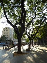 Avinguda del Parallel (stillunusual) Tags: barcelona street travel urban tree spain bcn citylife streetphotography streetlife streetscene catalonia catalunya urbanscenery 2016 travelphotography travelphoto travelphotograph avingudadelparallel elparallel avingudadelparallel elparallel