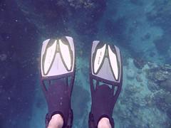 Koh Tao (Scuba Diving), Thailand (Jan-2016) 14-099 (MistyTree Adventures) Tags: ocean sea water thailand twins marine asia seasia underwater outdoor diving scubadiving diver kohtao fins gulfofthailand scubadiver panasoniclumix