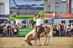 Pintos_Equitana_2016-0558 (tokerpress) Tags: messe pferde shou pintos tokerpress alexandertoker equitanaopenair ctokerpress2016 gestütgoldenepintos