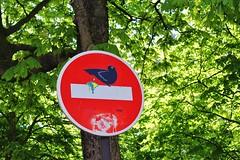 Clet_1647 avenue de la Soeur Rosalie Paris 13 (meuh1246) Tags: streetart paris animaux oiseau panneau paris13 clet avenuedelasoeurrosalie cletabraham