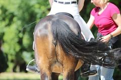 IMG_2506 (dreiwn) Tags: horse pony horseshow pferde pferd equestrian horseback reiten horseriding showjumping dressage reitturnier dressur reitsport dressyr ilsfeld dressuur ridingclub junioren ridingarena pferdesport springreiten reitplatz reitverein dressurreiten dressurpferd dressurprfung jugentturnier
