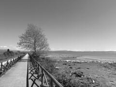 (Paolo Cozzarizza) Tags: panorama alberi italia mare pietra lungomare spiaggia grado gorizia friuliveneziagiulia
