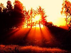 Rays of sunshine (craigmeechin) Tags: trees red newzealand beautiful weather silhouette interestingness interesting haze glare farmland sunrays reflectedlight raysofsunshine canterburynewzealand craigmeechin