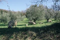 150328-11.jpg (giudasvelto) Tags: italia universit it toscana tesi borgosanlorenzo