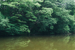 (li-penny) Tags: green japan  sendai miyagiken   sendaishi sigma1770mmf2845dcmacrohsm pentaxart aobayamapark pentaxk3 2016tokyosendaitrip