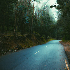 Wanderlust. (nshrishikesh) Tags: munnar trees wanderlust serenity photographer photography photowalk 11 travel traveller travelphotography vsco vscocam canon canon600d 1855 wideangle vacation happiness