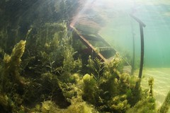 IMG_4371 (Andrey Narchuk) Tags: russia moscow freshwater green underwater weed tree