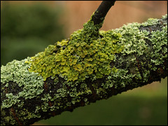 Day 55 (kostolany244) Tags: tree green smile germany cherry europe lichen february day55 greatcolours geo:country=germany olympuse510 kostolany244 3652012 365the2012edition smile2012 2422012