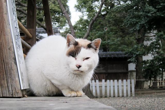 Today's Cat@2012-02-27