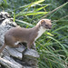 Weasel NottsWT (cpt Darin Smith)