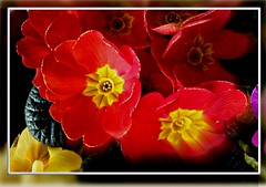 red flower rot zeiss handy lens favoriten rouge nokia... (Photo: eagle1effi on Flickr)