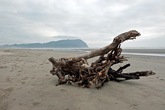 STRANDED  (2) (DESPITE STRAIGHT LINES) Tags: ocean wood sea usa tree water oregon seaside sand nikon day pacific cloudy hills driftwood coastline d700 ilobsterit