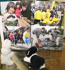 one year Japan earthquake tsunami memorial (emotiroi auranaut) Tags: bunnies japan book earthquake tsunami tragedy disaster rabbits fukushima