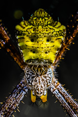 hypnotizing (Teo Morabito) Tags: bali detail macro eye up yellow hair spider interesting fantastic close wildlife web tribal masque photosteomorabitocom teomorabito