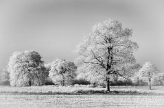 Frozen in Time (n55ffc) Tags: winter snow cold landscape frost treesblackandwhite micarttttworldphotographyawards micartttt michaelchee