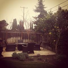lemon tree (Jenna Pinkham) Tags: california tree vintage lemon backyard phone cloudy sanjose overcast patio bayarea southbay iphone instagram