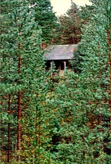 Royal Chalet deep in the Pinewoods (**Hazel**) Tags: norfolk royal chalet pinewoods holkham