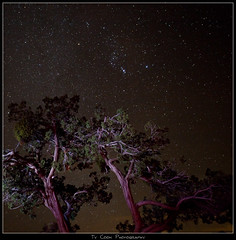 Constellation Orion over a Juniper (Ty in AZ) Tags: arizona canon stars sedona orion juniper carlzeiss tyinaz canon5dmark2 distagonf2821mm