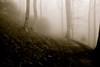"""camminare nella nebbia ("""" paolo ammannati """") Tags: panorama mountain me fog foglie alberi forest photographer shot top natura ombre io cielo tuscany toscana 1001nights terra nebbia acqua pioggia viaggi montagna verna biancoenero rami bosco casentino foresta laverna faggio paoloammannati effettinaturali """"flickraward"""" panaromafotografico """"flickraward5"""""""