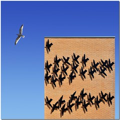 The group leader (Nespyxel) Tags: seagulls muro birds wall composition square fly seagull bricks uccelli volo gabbiano centrocommerciale groupleader capogruppo caposquadra fbdg nespyxel stefanoscarselli