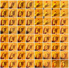 Rubber Chicken Pop Art (aforgrave) Tags: popart rubberchicken chickennugget ds106 tdc51 thedailycreate