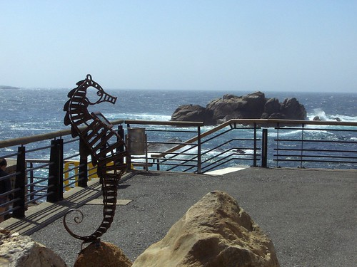 Caballito de mar. Sea horse.