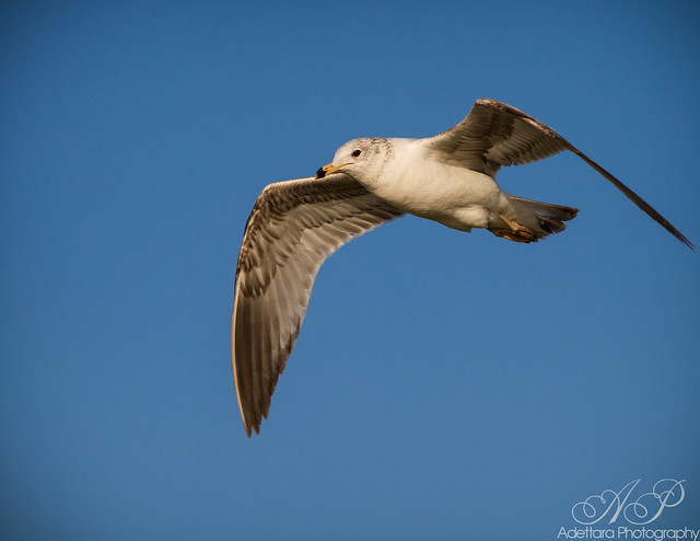 ~No bird soars too high, if he soars with his own wings~ William Blake