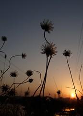 Sun-Rise (Rajesh_India) Tags: nature sunrise hyderabad hws icrisat