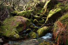 E o inverno, que no chega (ourigo) Tags: verde green water rio gua river riacho regato ilustrarportugal