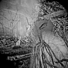 A Walk in the Woods (David Cory) Tags: holga toycamera multipleexposure diafine splitzer