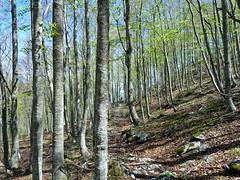 Escursionismo Gran Sasso - Colle Pelato