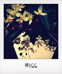 "#DailyPolaroid of 13-3-14 #166 • <a style=""font-size:0.8em;"" href=""http://www.flickr.com/photos/47939785@N05/13677835535/"" target=""_blank"">View on Flickr</a>"
