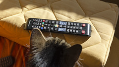 Cat looks at tv remote control (piropiro3) Tags: cat samsung remote katze remotecontrol fernbedienung