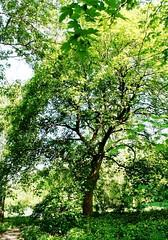 Revier Blankenfelde Frühling 2016 NSG Karower Teiche (Forstamt Pankow / Berliner Forsten) Tags: berlin wolken bäume sträucher berlinerforsten forstamtpankow revierblankenfelde eeprojekt waldweide nsgkarowerteiche frühling2016