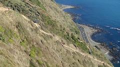 Paekakariki to Pukerua Bay New Zealand Escarpment walk (spiceontour) Tags: walkway tasmansea tramp escarpment porirua paekakariki 2016 pukeruabay nimt shno1