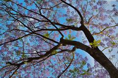 Spring colors. (Carlos Arriero) Tags: espaa naturaleza tree primavera nature colors composition spring sevilla andaluca spain nikon europa europe colores diagonal rbol tamron composicin airelibre 2470mm realesalczares d800e carlosarriero