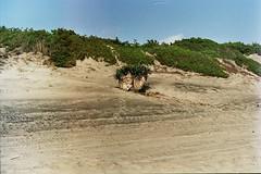 Sabaudia - giugno 2015 (laura.effe) Tags: sea summer sky water clouds palms sand nuvole mare estate blu dune nostalgia cielo acqua lungomare palme grado paesaggio lido sabbia pontile sabaudia litorale pescatori bagnasciuga