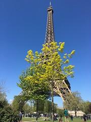 IMG_7618 (elizabeththe) Tags: paris france europe eiffeltower champdemars