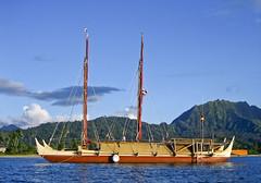19.49 Quiz Hokule'a in Hanalei (mauitimeweekly) Tags: hawaii canoe hawaiian hanalei quiz hokulea voyagingcanoe 1949quiz