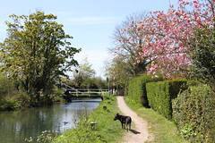 Basingstoke Canal (orbit9000) Tags: dog water canal spring explore waterway fruehling basingstokecanal