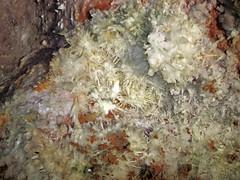 Anthodites (Skyline Caverns, Front Royal, Virginia, USA) 4 (James St. John) Tags: anthodite anthodites speleothem calcite aragonite skyline caverns virginia ordovician beekmantown group rockdale run formation front royal warren county