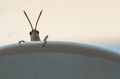 Macro Mondays-Anything Goes-Grasshopper on a Coffee Mug
