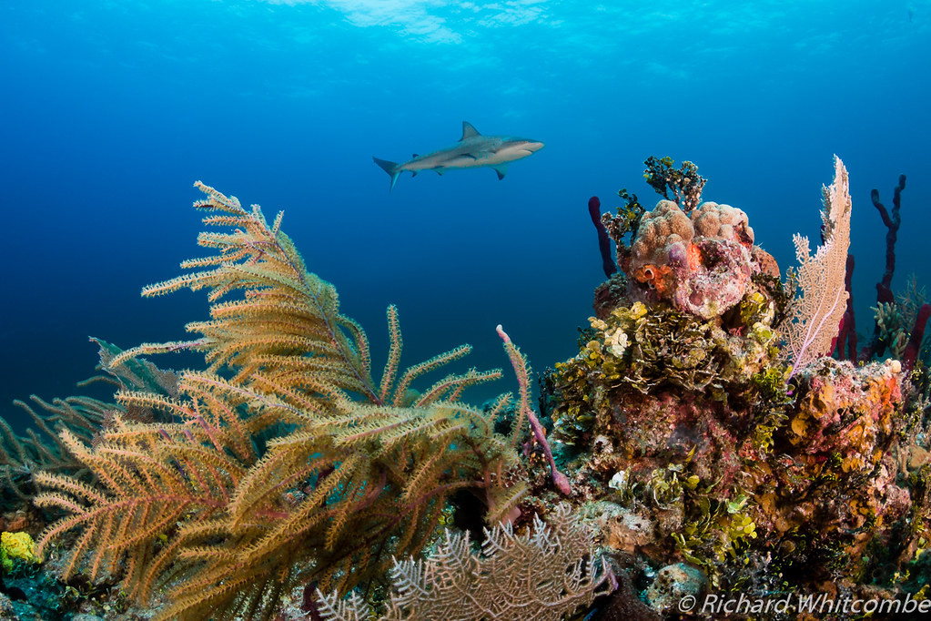Caribbean Sea Animal Life: The World's Most Recently Posted Photos Of Caribbean And