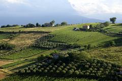 Offida, Aussicht von Santa Maria della Rocca (7) (HEN-Magonza) Tags: italien italy nature landscape italia natur landschaft the marches lemarche offida diemarken