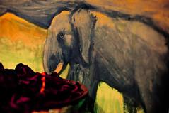 maju slony radi ruze?