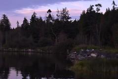 Elgin Heritage Park (careth@2012) Tags: trees sunset reflection nature reflections landscape nikon scenery rocks view dusk britishcolumbia scenic scene naturereserve ripples wilderness naturepark elginheritagepark 55300mm nikond3300 d3300